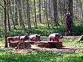 Wildschweine und Bären im Naturpark Schönbuch - panoramio.jpg