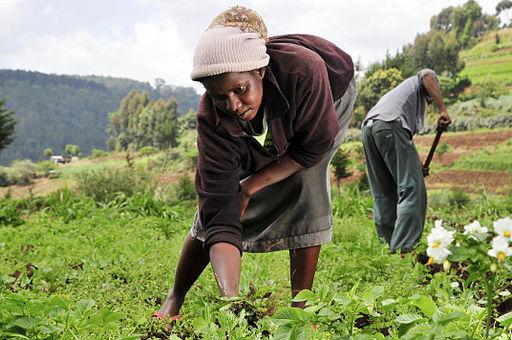 Woman farmer in Kenya