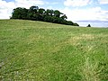 Wood-topped hill at Barrow - geograph.org.uk - 882293.jpg