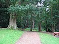 Woodland at Bramhall Hall - geograph.org.uk - 52284.jpg