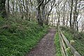 Woodland at Pennance Point - geograph.org.uk - 163657.jpg