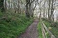 Woodland at Pennance Point - geograph.org.uk - 163657.jpg