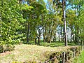 Woodland near Ruthven - geograph.org.uk - 177298.jpg