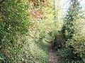 Woodland path at Whitchurch - geograph.org.uk - 603741.jpg