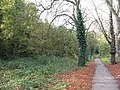 Woodland path on Barnes Common - geograph.org.uk - 1561463.jpg