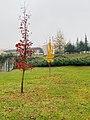 Yellow Trees in winter.jpg