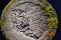 Zürichhorn - Nymphenteich 2014-02-24 16-31-35.JPG