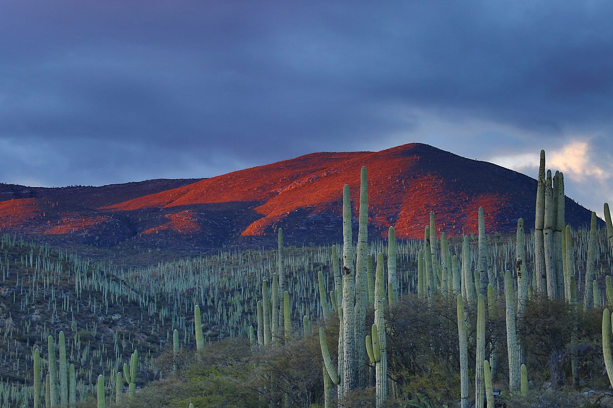 Zapotitlán Salinas tiene bellos paisajes desérticos dominados por cactáceas.