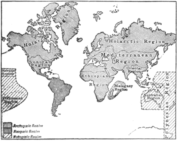 Zoological Distribution map EB1911.png