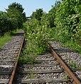 """""""Wer wagt es, sich den donnernden Zügen entgegenzustellen? Die kleinen Blumen zwischen den Eisenbahnschwellen!"""" (E. Kästner) - panoramio.jpg"""