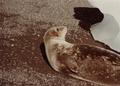 (Jubany) Recuento de mamíferos (16).png