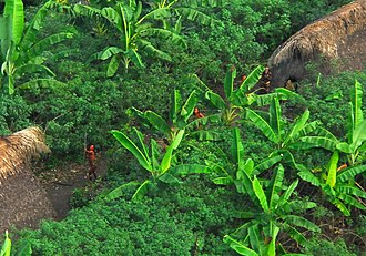 Uncontacted peoples - Members of an uncontacted tribe encountered in the Brazilian state of Acre in 2009.