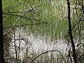 Částrovické rybníky (020).jpg