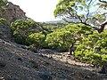Πευκόδασος στην περιοχή Μονής Κουδουμά Ηράκλειο Κρήτης.jpg