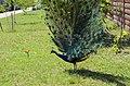 Бердянский зоопарк 103.jpg
