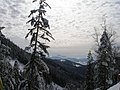 Еталон ялице-смерекового насадження в Добошанському лісництві.jpg