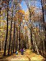 Измайловский парк - panoramio.jpg
