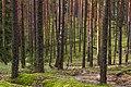 Лесной массив у села Теребень.jpg