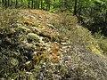 Мезотрофна рослинність на штучному пагорбі в заказнику Полігон.jpg