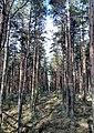 """Национальный парк """"Куршская коса"""" 20200930 111118.jpg"""