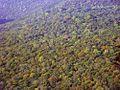 Осінь - panoramio (3).jpg