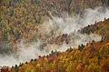 Пік осені в букових лісах заказника Темнатик.jpg