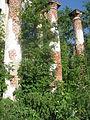 Руины усадьбы Погост 20.jpg