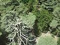 Сухой Кедр. Склон г.Тахталы. Кемер. Турция. Июнь 2012 - panoramio.jpg