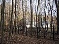 Украина, Киев - Голосеевский лес 217.JPG