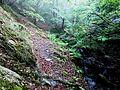 Шумски предел на Плачковица.jpg