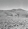 הר מירון נשקף מעין זיתים. גובהו 1200 מטר-JNF036309.jpeg