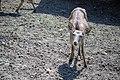 حیوانات باغ وحش مرکزی شهر تفلیس پایتخت گرجستان 43.jpg