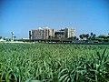محافظة الشرقية - الزقازيق - أبراج الصيادلة بالزراعة.jpg