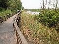 南沙湿地木栈道 - Wooden Boardwalk in Nansha Wetland - 2012.03 - panoramio.jpg