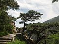 后石坞古松 - Ancient Pines in Houshiwu Scenic Area - 2012.07 - panoramio.jpg