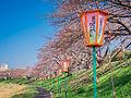 岡山さくらカーニバル (16975657292).jpg
