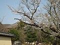 戒壇堂より大仏殿を望む - panoramio.jpg