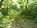 林道の終点に出た - panoramio.jpg