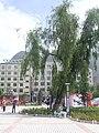 桥头·县委广场 - panoramio.jpg