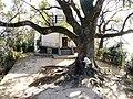 樹齢500年のクスノキの大木 - panoramio.jpg