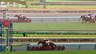 Stayers Stakes