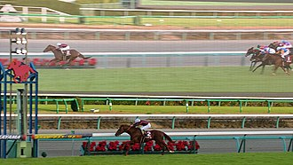 Stayers Stakes - 2015 Stayers Stakes