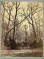 -Man in a Forest Landscape- MET DT223780.jpg