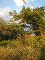 0444jfHoly Cross Parish Church School Sunset Barangay Caloocan Cityfvf 03.JPG