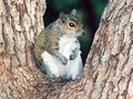 06-06-100002squirrel.jpg
