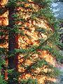 08 tree.jpg