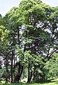 0 Uccle - Châtaigners - Parc du Wolvendael.JPG