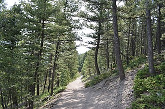 Mount Helena City Park - 1906 Trail in July 2018.