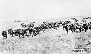 11th Light Horse Regiment (Australia) - C Squadron resting their horse en route to Beersheba