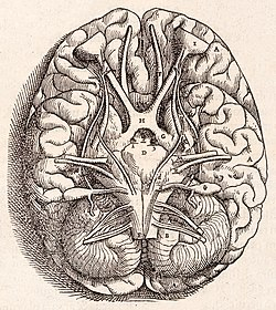 1543, Andreas Vesalius' Fabrica, Base Of The Brain.jpg